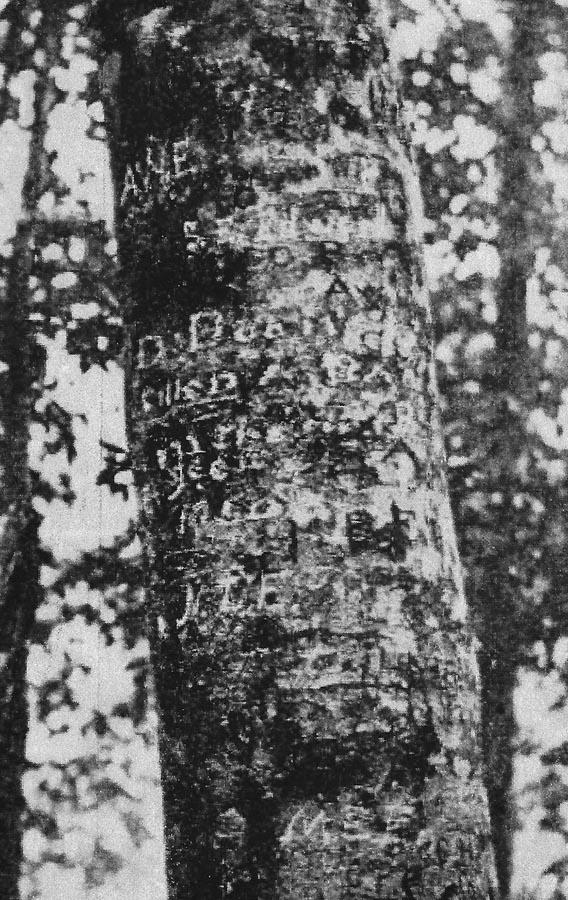 Daniel Boone Beech