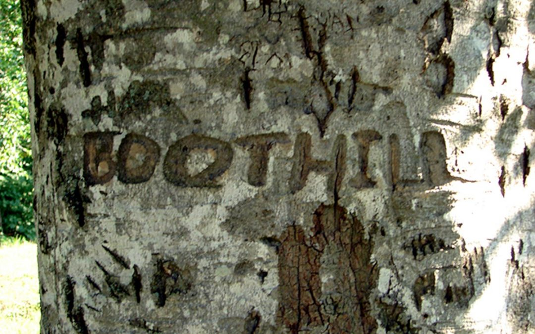 DeLap Cemetery Civil War Beech #14