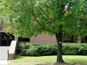 Linda T Collins Memorial