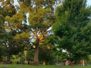 Okeena Park