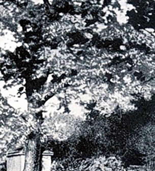 Toll Oak