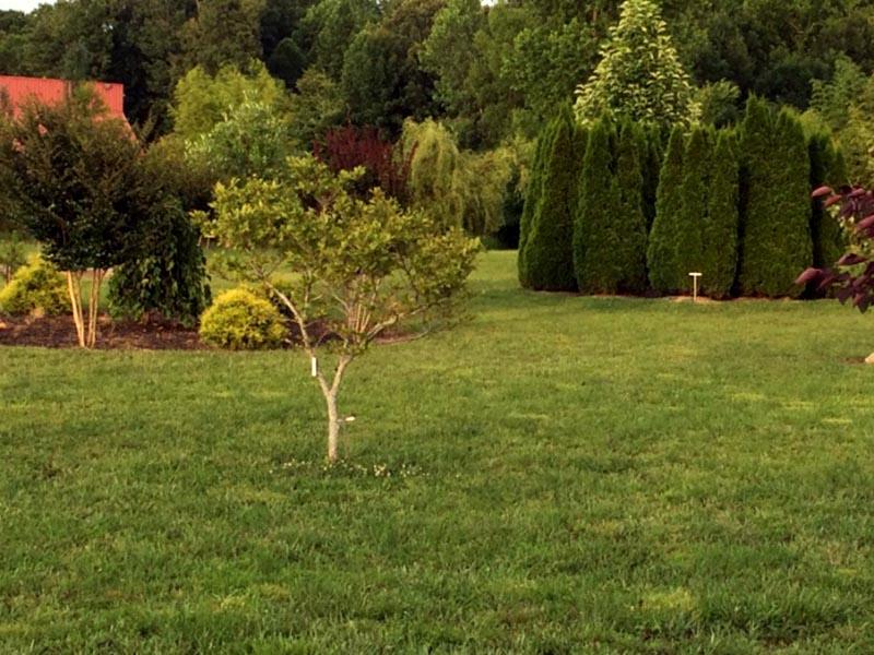 White House Arboretum
