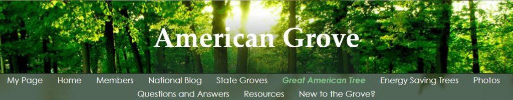 American Grove