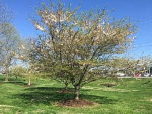 Parris Powers Memorial Arboretum