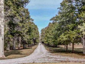 Wilson Tree Sanctuary