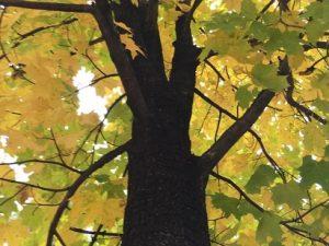 Fort Wood Arboretum