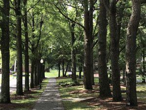 Southwind Arboretum