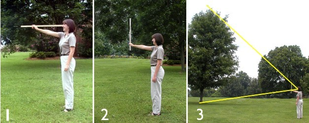 How To Measure a Tree
