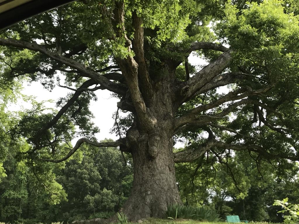 UT Arboretum
