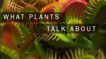 What Plants Talk About
